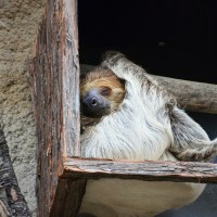 Slothfulness
