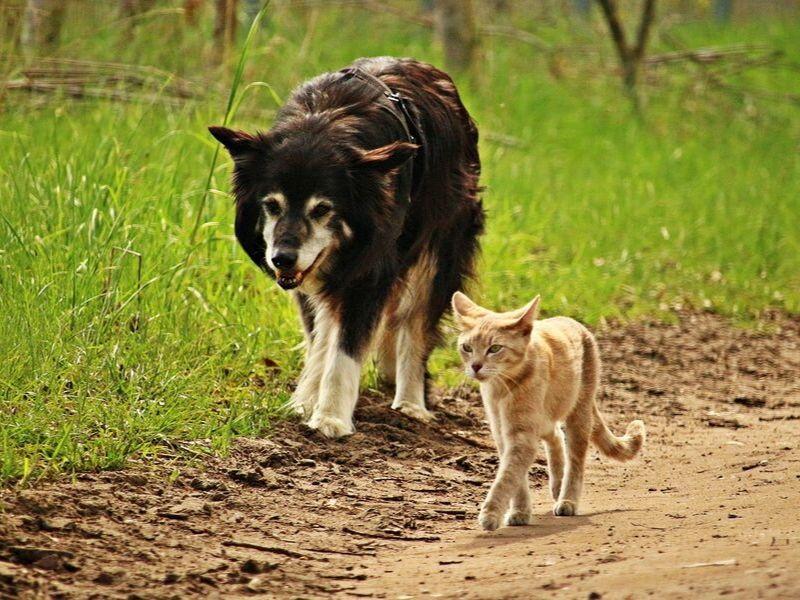 Conversation Starters: Animal Intelligence