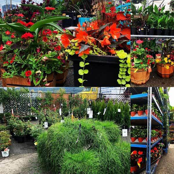Garden centre in Olds, annuals, perennials, flowers, vegetables, basket stuffers.