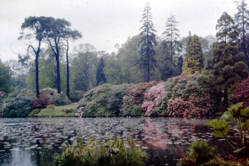 SussexPark - Sussex-1966-02-Sheffield-Park.jpg