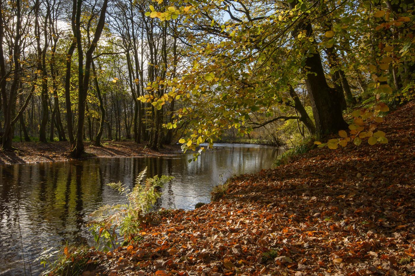 Autumn at the Turret