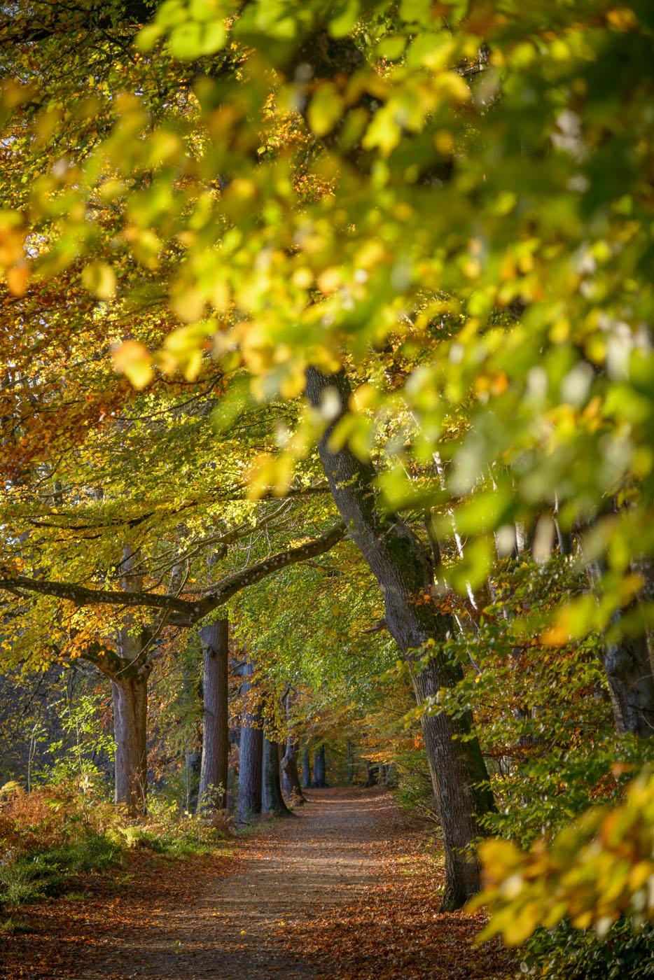 Lady Mary's Walk, Autumn, Crieff