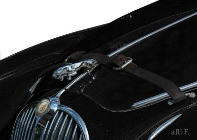 Jaguar Mark II Motorhaube in black & grey 1