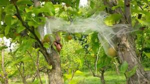 Exploring VA Wines-pears1
