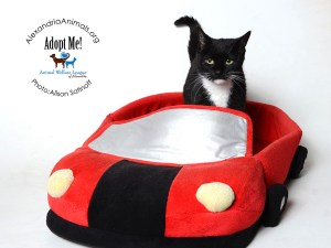 Pet of the Month-Minnie