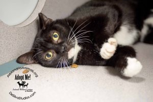 Pets of the month-Harper