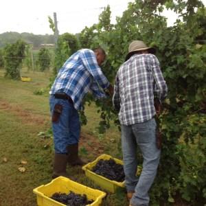 exploring-va-wines-1