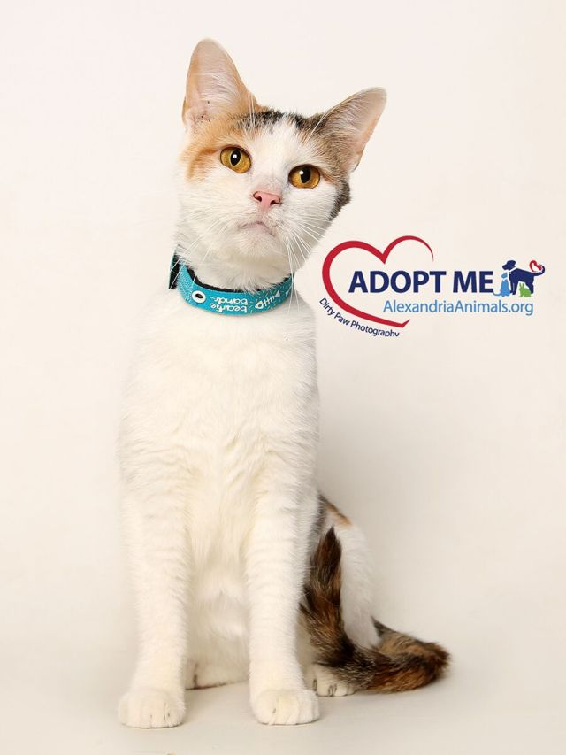 pets-of-the-month-kitty-hope-11-16