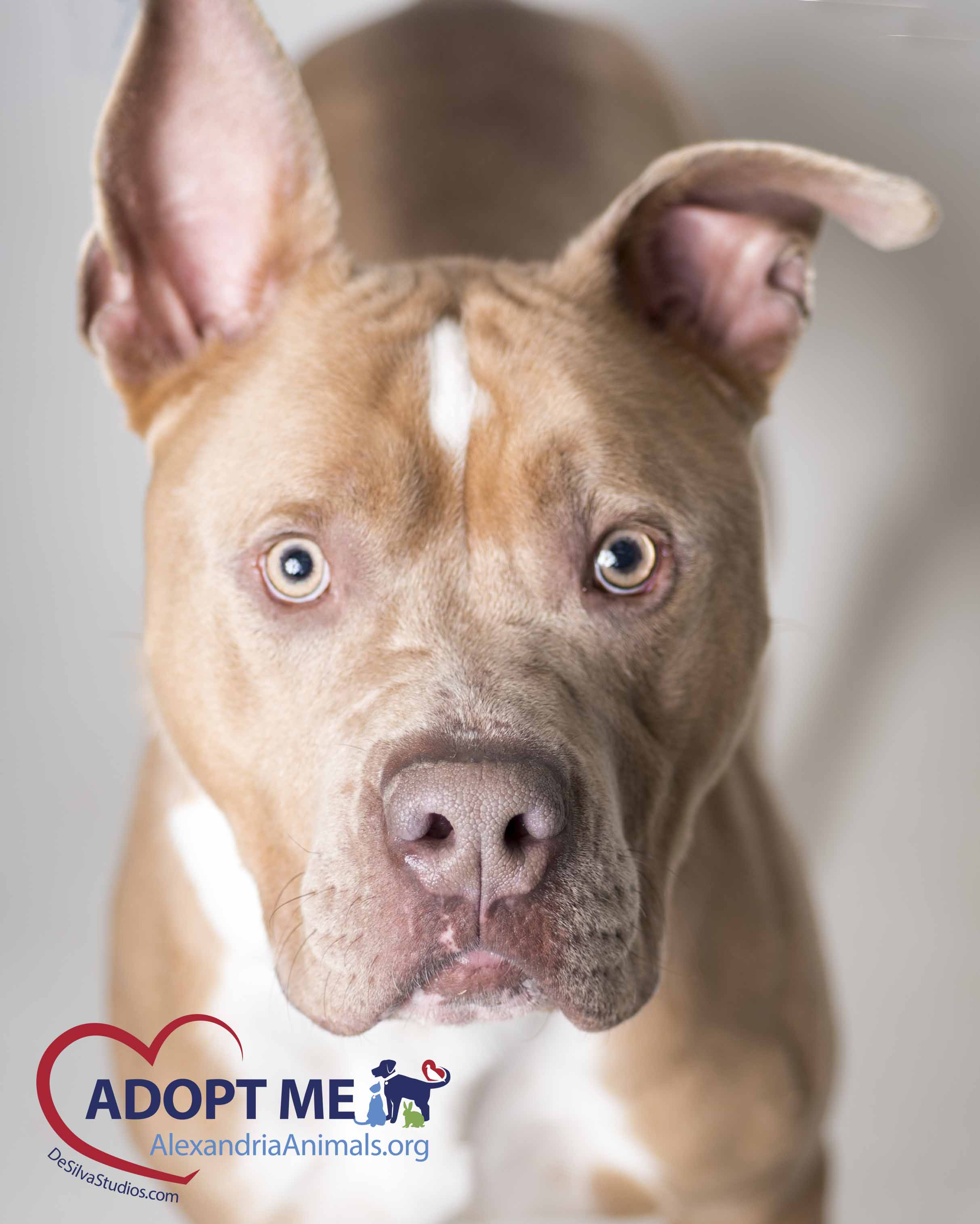 January 2017 Pets of the Month