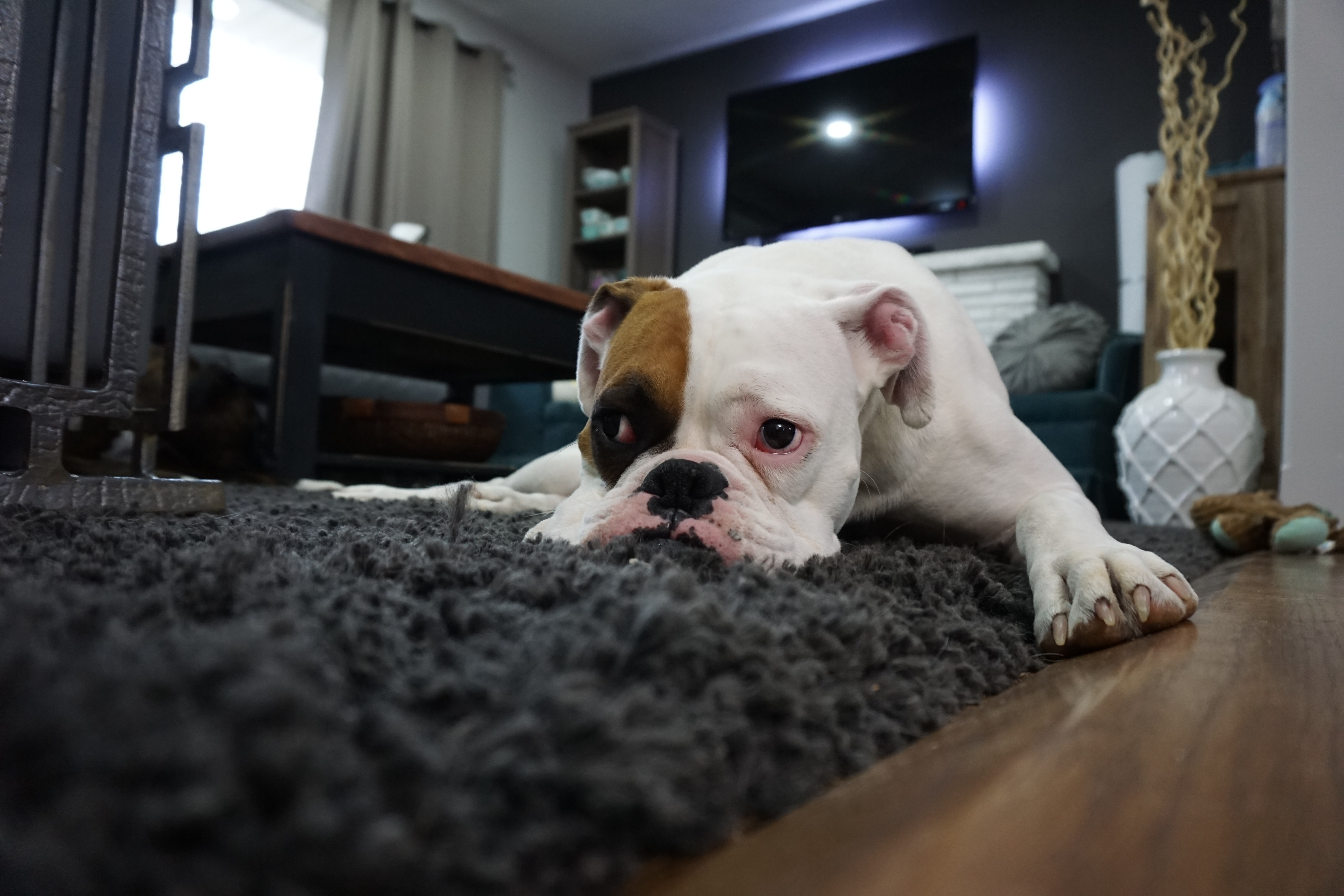 Bored Pooch? Consider Doggy Daycare