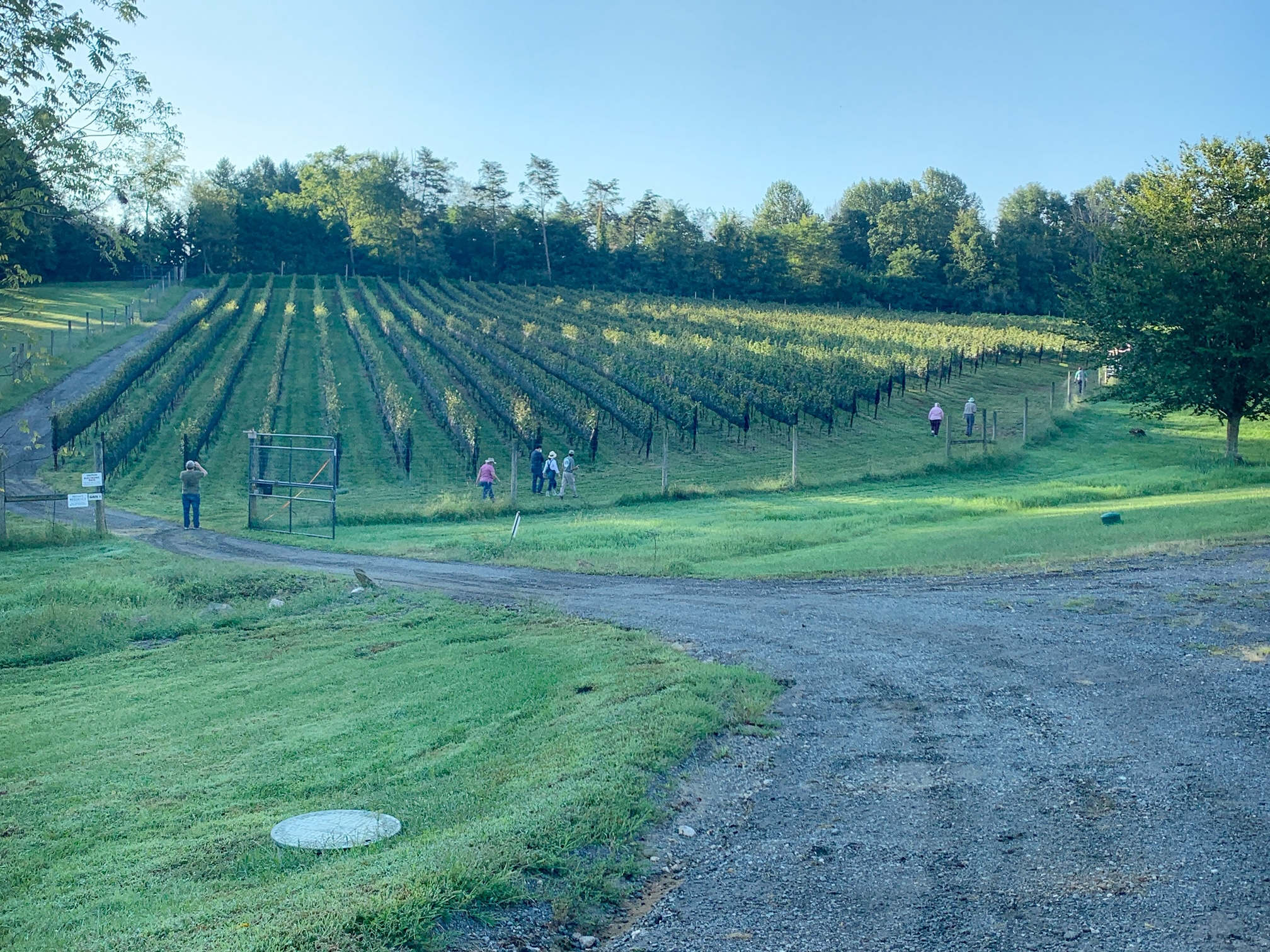 Getting the Most from Virginia Wine Month