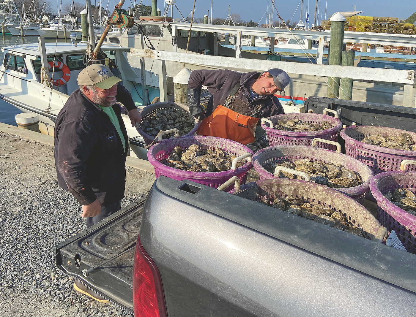 Oyster Prices Plummet AmidPandemic-Help Is On the Way!