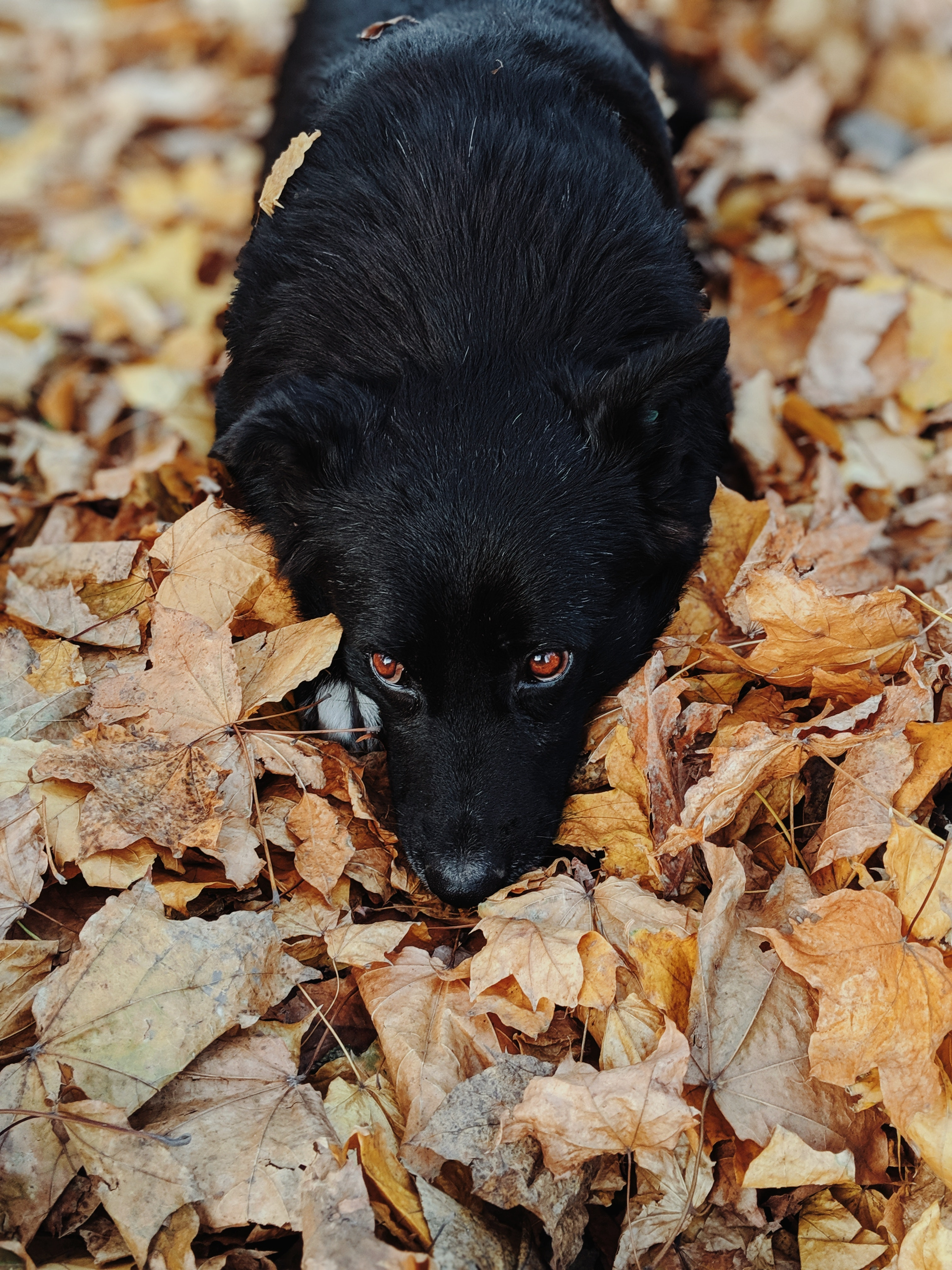 Enjoying the Pleasures of Autumn with Your Pet …Safely!