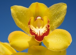 The Tenants' Hall at Tatton Park will host one of the largest displays of orchids you will find