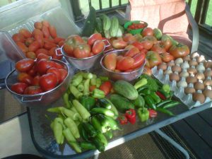 A day's harvest from the farm last summer - always a good feeling knowing what is in (and what is not) your food!