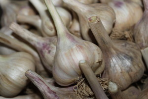 Garlic is a great natural toxin to insects.