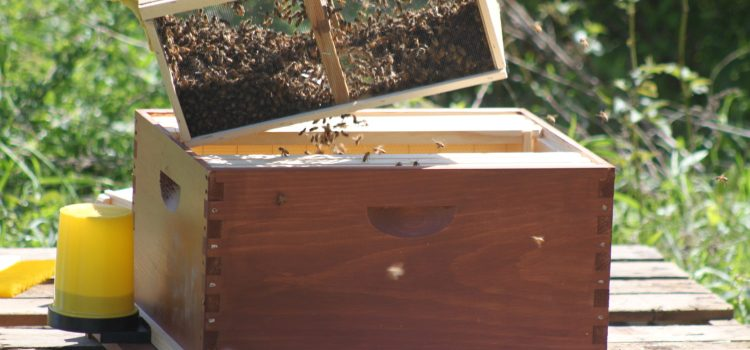 Keeping Bees – Adding More Hives To The Farm This Year