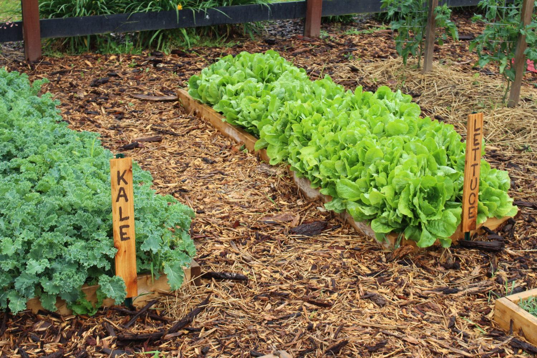 10 Spring Garden Crops To Get Growing Now! - Old World Garden Farms
