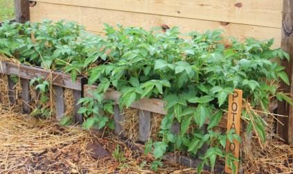 garden experiments