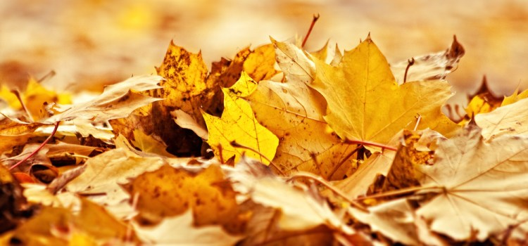 How To Use Autumn's Falling Leaves To Power Next Year's Garden!