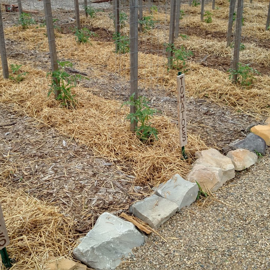7 Quick Garden Tips To Keep Your Garden Beautiful This Summer!