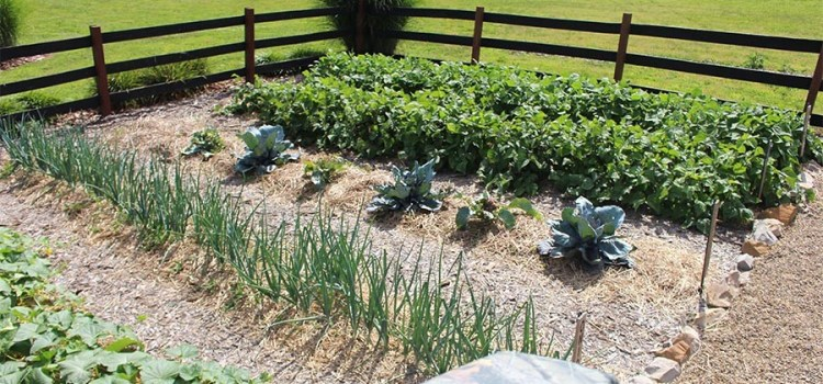 Raised Row Gardening Grows – The Simple Growing Method Takes Center Stage!
