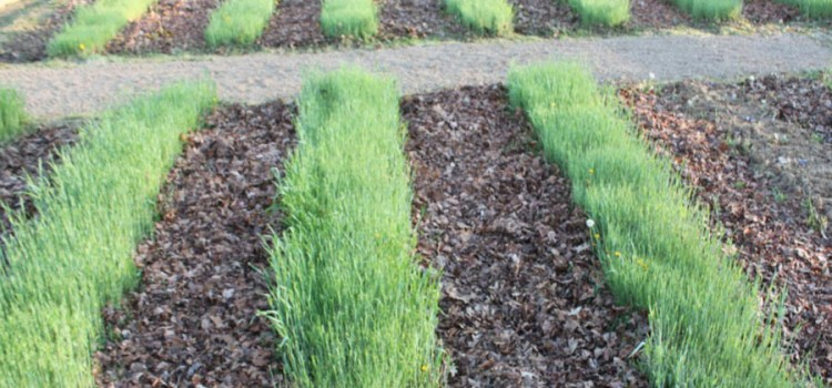 How To Breathe Life This Spring Into Your Tired Garden Soil