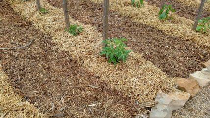 eradicate weeds