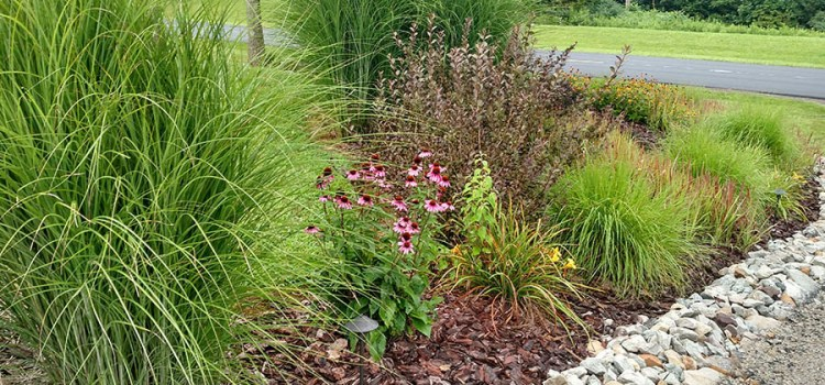 4 Keys To Create A Gorgeous, Easy To Maintain, Low Cost Landscape!