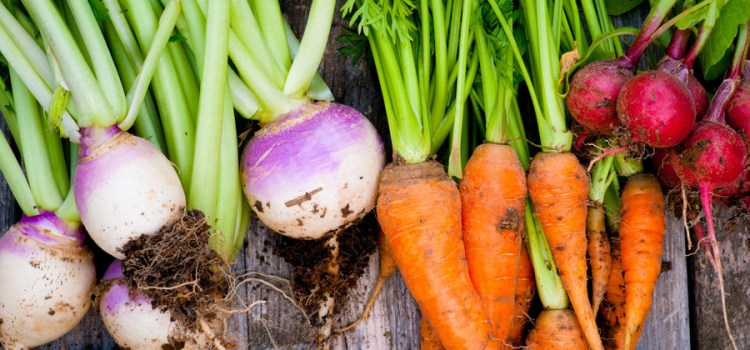 The One Simple Secret To An Amazing Weed Free Vegetable Garden
