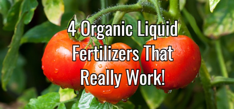 Liquid Fertilizers – 4 Organic Solutions To Power Your Garden And Flowers!