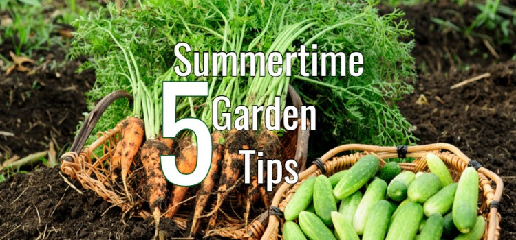 5 Big Vegetable Garden Tips To Keep Plants Healthy All Summer Long!