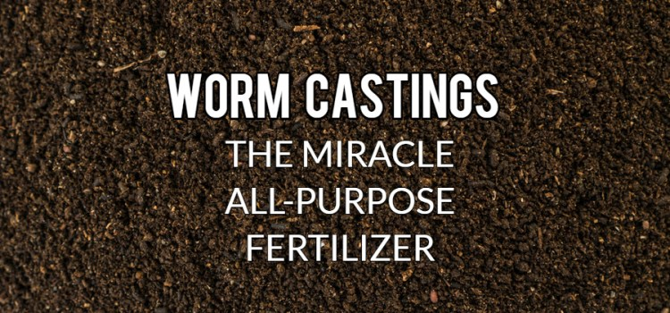 How And Why To Use Worm Castings  – The Miracle All-Purpose Fertilizer!