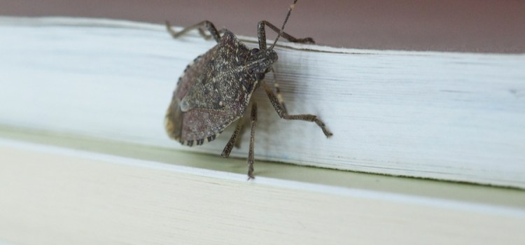 How To Keep Stink Bugs Out Of The House – The Fall Invasion Begins!