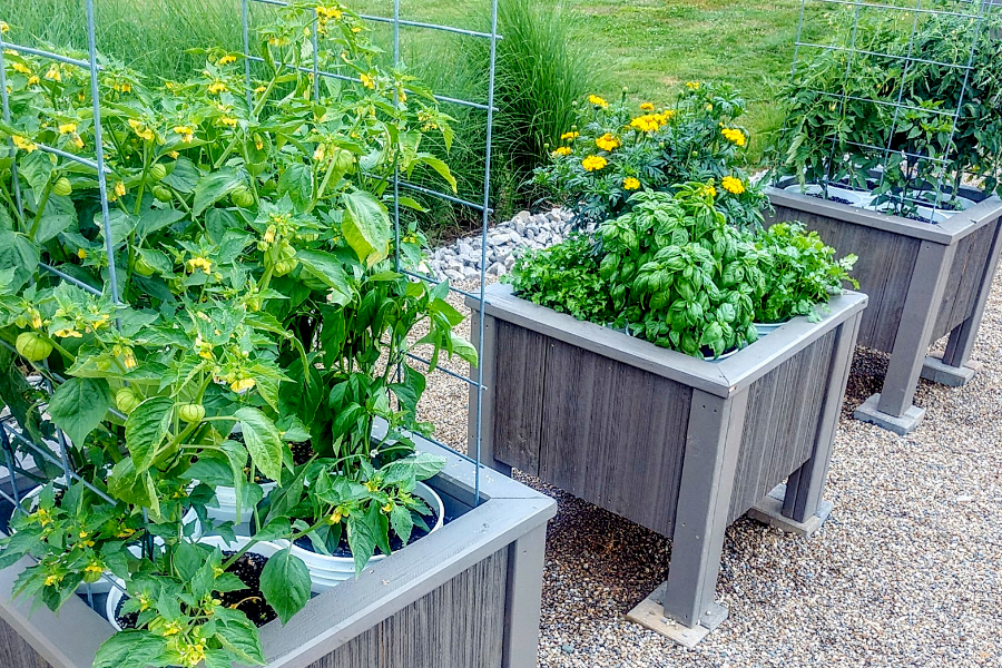 patio vegetable garden with planters
