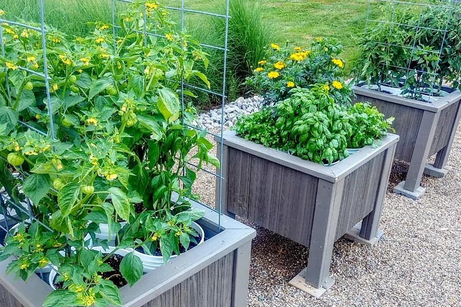 the diy 5 gallon bucket planter box