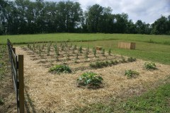 Mulching your walking rows keeps the weeds down and the garden looking great