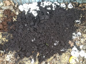 Coffee grounds are a great addition to planting holes and around plants as well