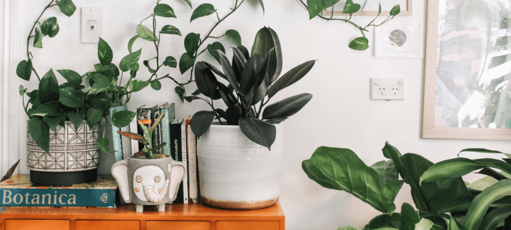 eco-friendly cleaning resources