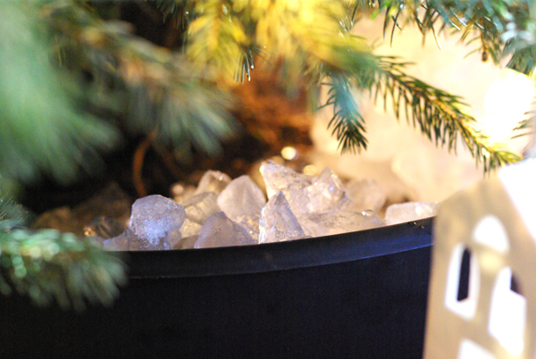 Colorado Blue Spruce Potted Christmas Tree