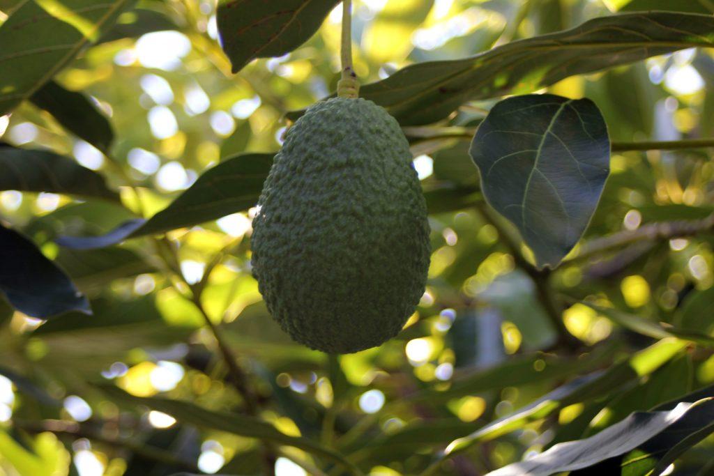 olefruits_jesus_4