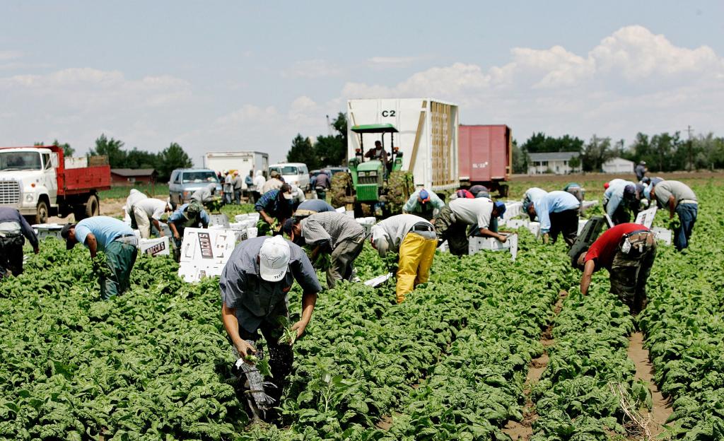 Apoyan a trabajadores del campo a través del programa Movilidad Laboral