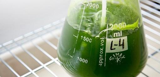Investigadores sinaloenses desarrollan bebida antioxidante, a través de microalgas