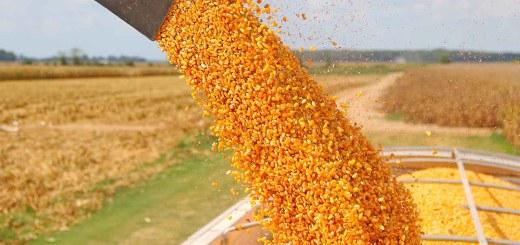 Hace SAGARPA llamado URGENTE a productores de maíz ciclo O-I 16/17 a completar sus expedientes.