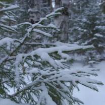 Снег на еловых ветках, фото, Олег Чувакин, 3