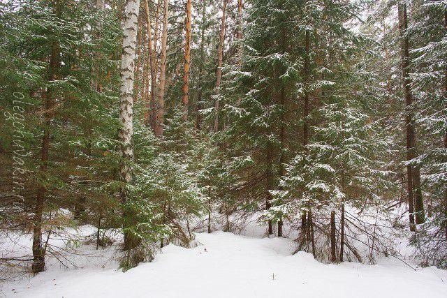 Дед Мороз, Новый год, 2017, рассказ, Олег Чувакин