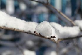 Сирень, снег, октябрь 2015, фото