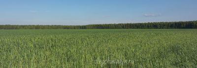 Русское поле, фото, Смех сквозь слёзы, Олег Чувакин, умирание русского языка