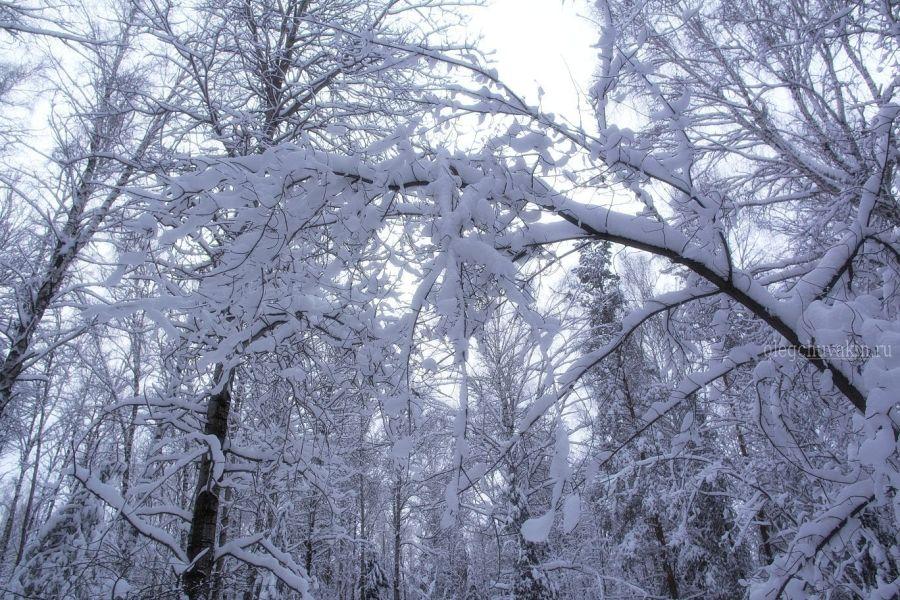 Зимний лес, снег, фото, 2016, январь