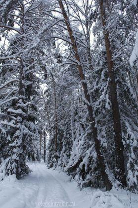 Сибирский лес в январе, снег, фото